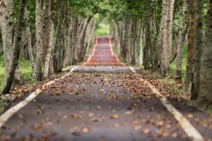 Llega el buen tiempo aprovecha a pintar otoño-pintores-bilbao