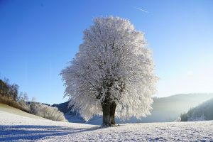 invierno para pintar